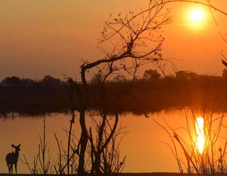 Kudu at sunset, Zambezi, Anja Denker.