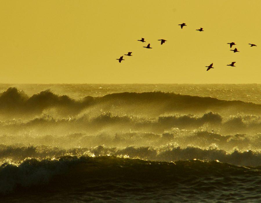 Coastal waves, Paul van Schalkwyk.
