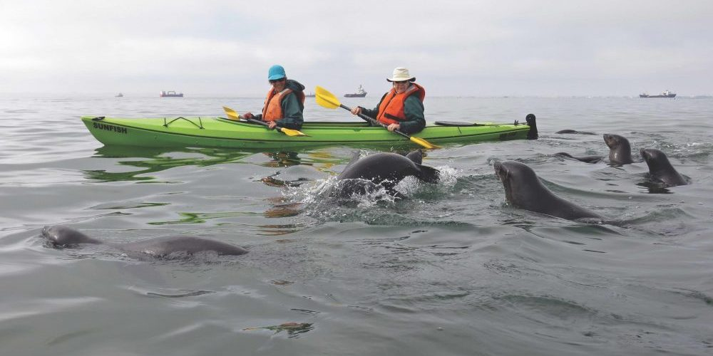 Seals, and kayaks, Ron Swilling