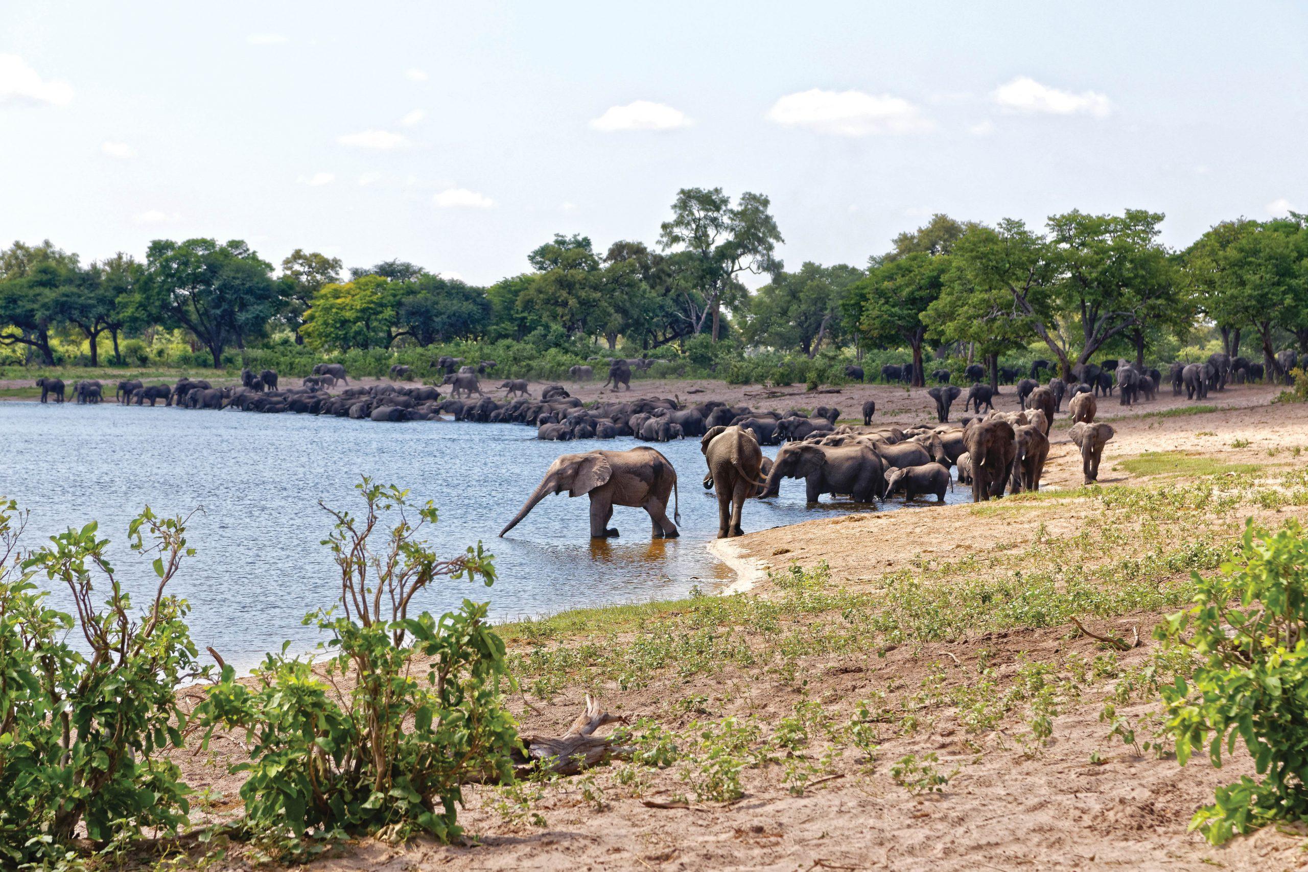 elephants horseshoe bend Bwabwata